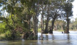 Cambodia Flooded Forests