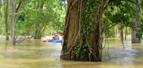 Cambodia Flooded Forests Kayaking